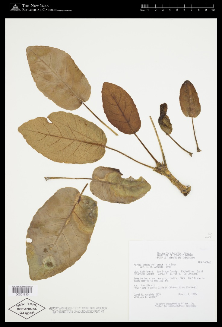 Virtual Herbarium Image